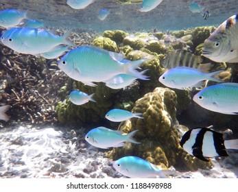 Reef life in Tumon bay, Guam, Mariana Islands