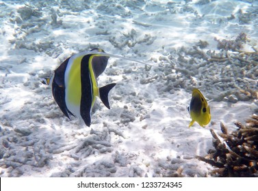Reef life in Tumon bay, Guam, Mariana Islands. Colorful fishes crowd around in clear water