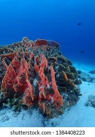 Reef in Rabaul diving , East New Britain