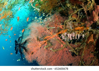 Reef scenic, Bali Indonesia.