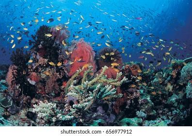 Reef scenic, Milne Bay, Papua New Guinea.