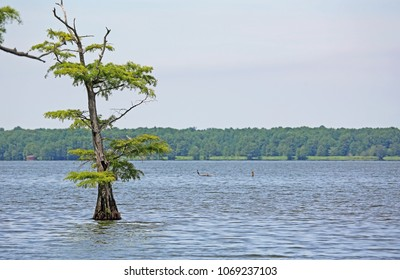 Reelfoot lake and cypress tree - Reelfoot Lake State Park, Tennessee