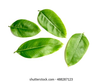 reen leaf on a white