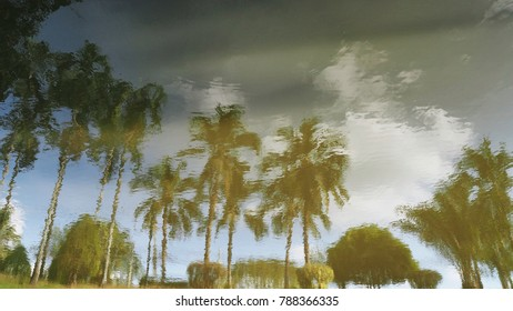 Refection of coconut tree and cloud on the water