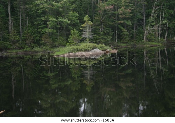 refection of trees in lake summertime maine n.y.