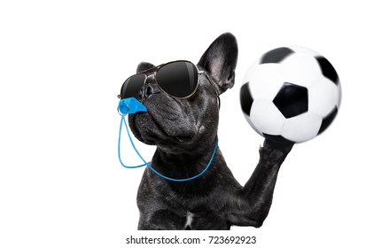 referee arbitrator umpire french bulldog dog blowing blue whistle in mouth ,catching a soccer ball,  isolated on white background