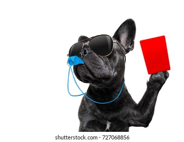 referee arbitrator umpire french bulldog dog blowing blue whistle in mouth ,showing red card,  isolated on white background
