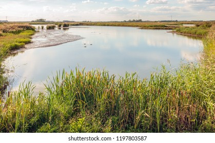 Reflecting wide creek in the old and untouched Dutch nature reserve De Biesbosch with swimming water fowls. The coots create lines in the mirror smooth water surface by swimming. Summer is at the end.