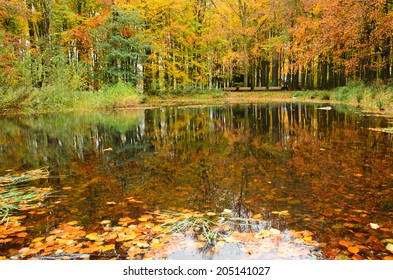 Reflection of autumn trees with colored leaves in a pond in a forest.