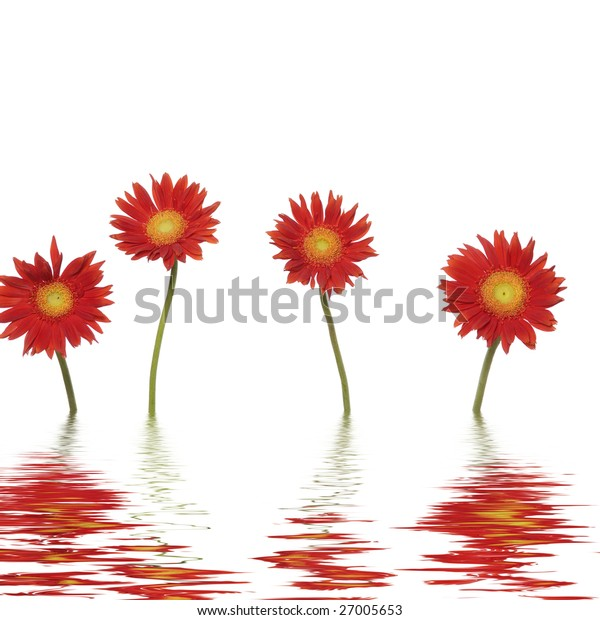 Reflection for beautiful red flower