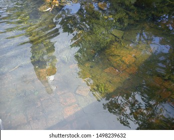 Reflection of blue sky and trees in the clear water of a fountain in a city park. The stone bottom of the old pavers is covered with green silt and algae