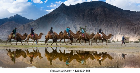 Reflection of the camel riders