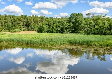 reflection of clouds in the lake with forest  and trees in background
