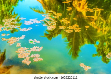 Reflection of coconut palm trees around the pond