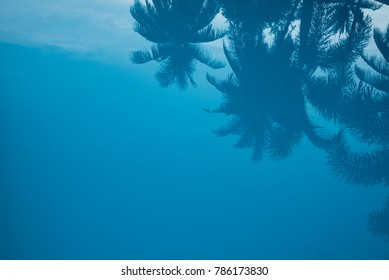 Reflection of coconut tree in swimming pool