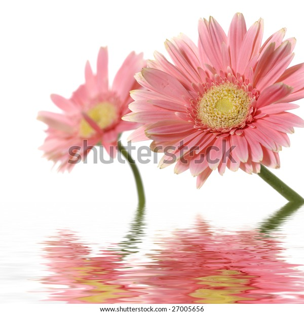 reflection for couple red flower