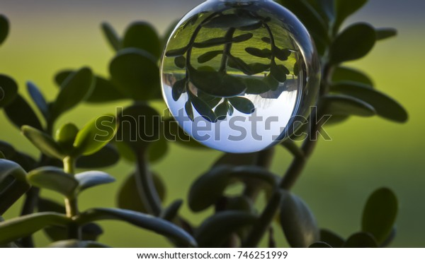 Reflection in crystal ball of green leaves