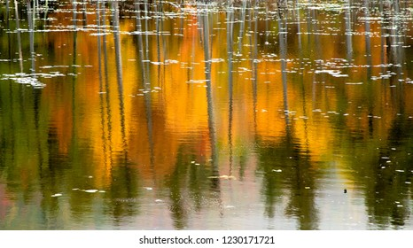 Reflection of Fall Colors in Beaver Pond in the Adirondack Mountains, New York