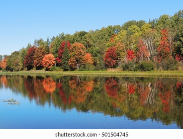 Reflection of fall trees