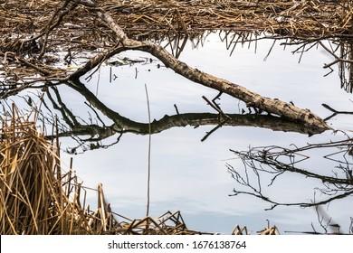 Reflection of a fallen tree in Sheridan Creek, Rattray Marsh