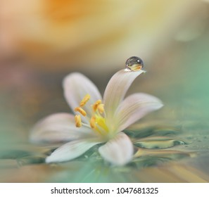 Reflection of the flower in the dew drop. A drop of water on the petal of a white flower close-up macro. Gentle romantic spring artistic image. Soft pastel background blur .Floral fantasy design.