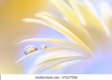 Reflection of the flower in the dew drop. A drop of water on the petal of a yellow flower close-up macro. Gentle romantic spring artistic image. Soft pastel background blur .