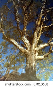reflection of ghost gum in river