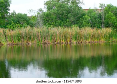 reflection of the green grass in a pond