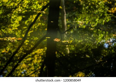 Reflection of green, yellow trees and leafs of the city park on water in october, autumn season.