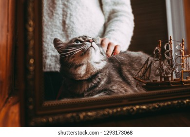 reflection of grey cat near woman's hand