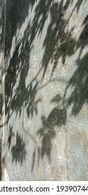 the reflection of the leaf shadows on the wall
