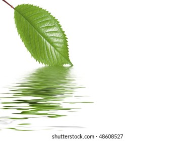 reflection of leaves in water
