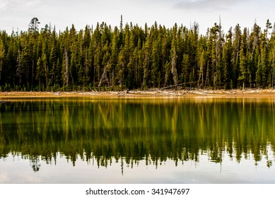 The reflection of a line of pine trees in Yellowstone National Park, WY.