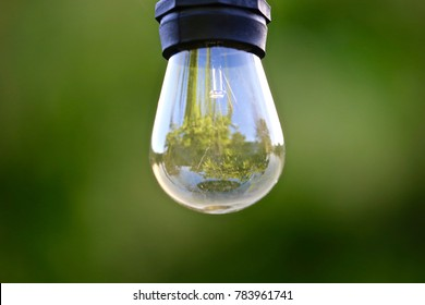 The reflection of lush  green foliage captured inside a crystal clear close up of an eincandesanrt light bulb.