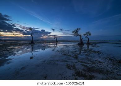 Reflection of Mangrove Tree during dusk at Walakiri Beach, Sumba