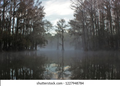 Reflection of misty morning in a swamp pond lined with bald cypress trees.