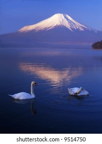 The reflection of Mt. Fuji on a lake and swans love talking