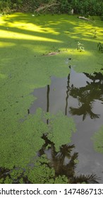 Reflection of nature in between nature gaps