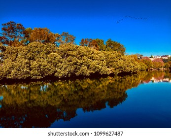 the reflection on the cooks river, Marrickville NSW