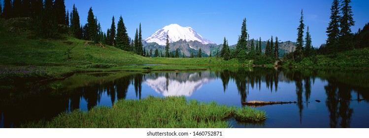 Reflection of Pine Trees Near Lake, Beautiful Panoramic View of Landscape
