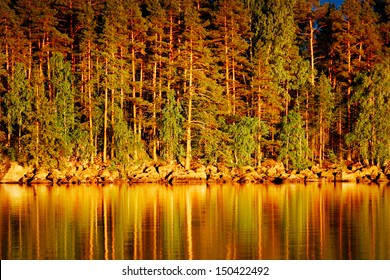 Reflection of pines in water at golden sunset