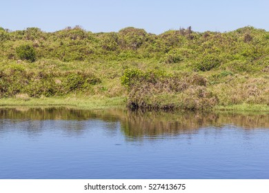 Reflection of plants in a lake over the cliffs at Torres beach