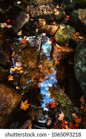Reflection in a pool, creek in Acadia National Park during peak fall foliage season