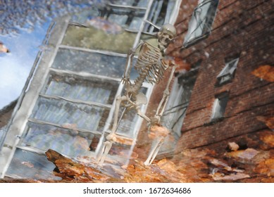 Reflection of Skeleton and leaves