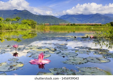 the reflection of the sky and mountain, Waterlily in the Xinliang Wetland,Taitung, Taiwan