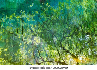 Reflection of tree branches in the lake water