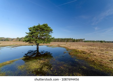 Reflection of a tree near Stockley in the New Forest National Park
