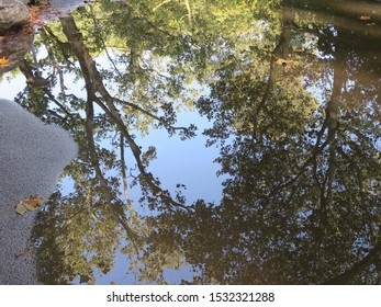 the reflection of a tree in a pool of water in the Vondelpark in Amsterdam