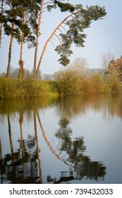 Reflection of tree in the river, the reeds on the banks, misty early morning, autumn in Poland
