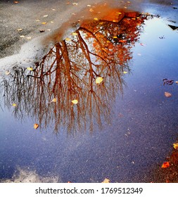 The reflection of a tree through a puddle